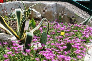 Весеннее цветение1