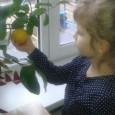 Выращиваем цитрусовые